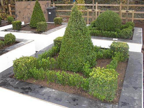 box hedging